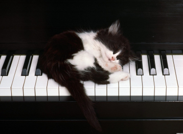 1495-cute-kitten-sleeping-on-piano-keys-wallpaper-wallchan-1440x1050 2