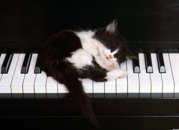 1495-cute-kitten-sleeping-on-piano-keys-wallpaper-wallchan-1440x1050 2