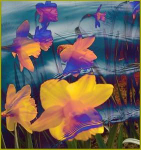 daffodiills-1